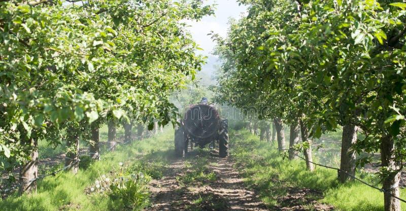 Traktor spr?ht Insektenvertilgungsmittel auf den Apfelgartengebieten stockfotografie
