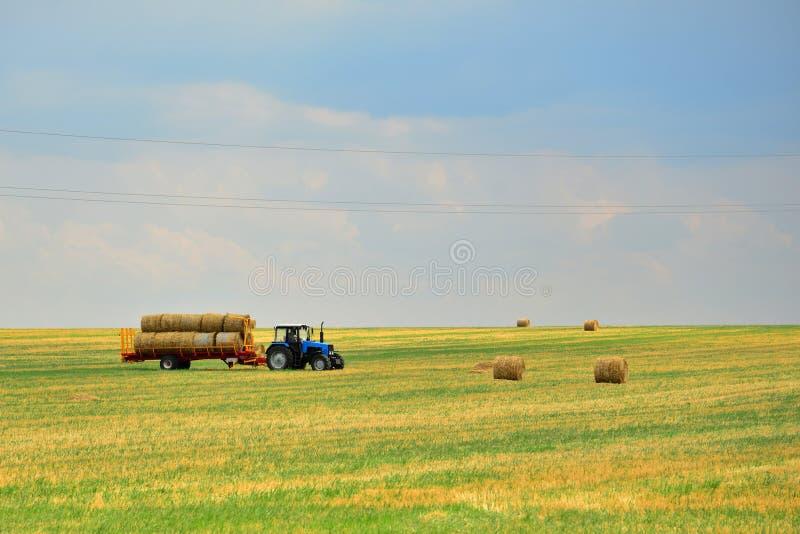 Traktoren samlar höet i kärvar och tar det av fältet efter ha mejat av kornet Agroindustrial bransch royaltyfria bilder
