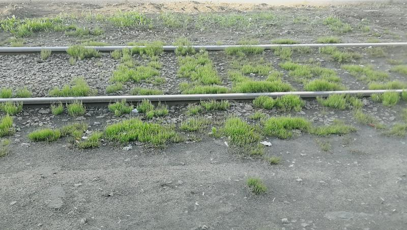 Tram rails on stop. Overgrown tram rails at a public transport stop in a big city royalty free stock photos