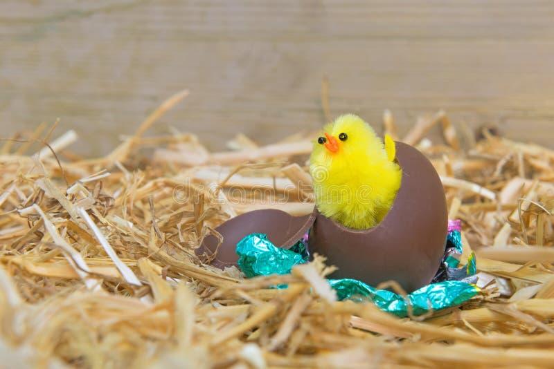 Trama del polluelo de Pascua fotografía de archivo libre de regalías