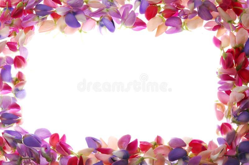 Trame colorée de pétales photo libre de droits