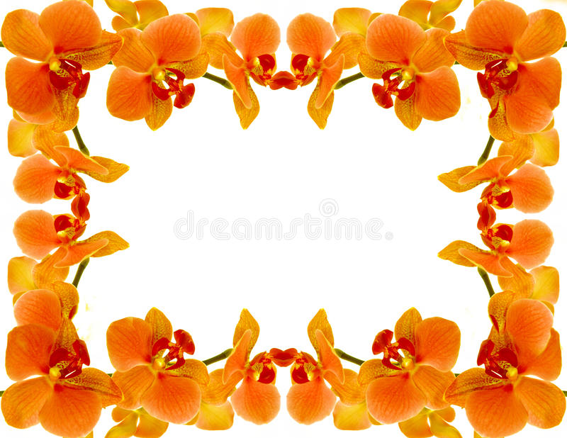 Trame d'orchidée images stock