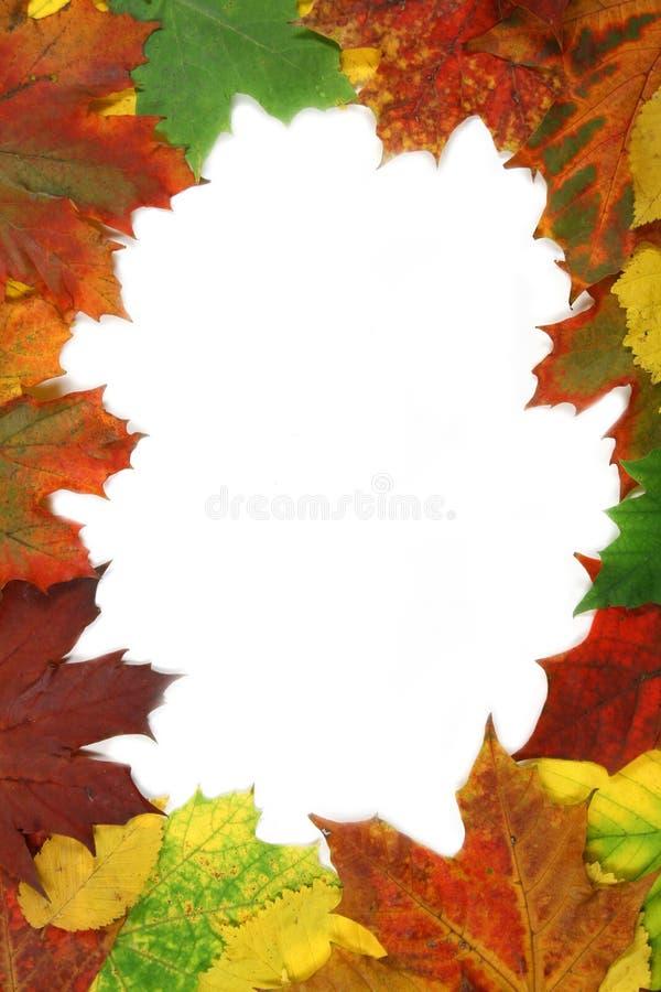 Trame de lames d'automne photo libre de droits