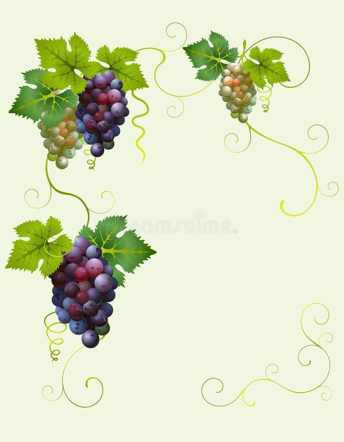trame de raisin illustration libre de droits
