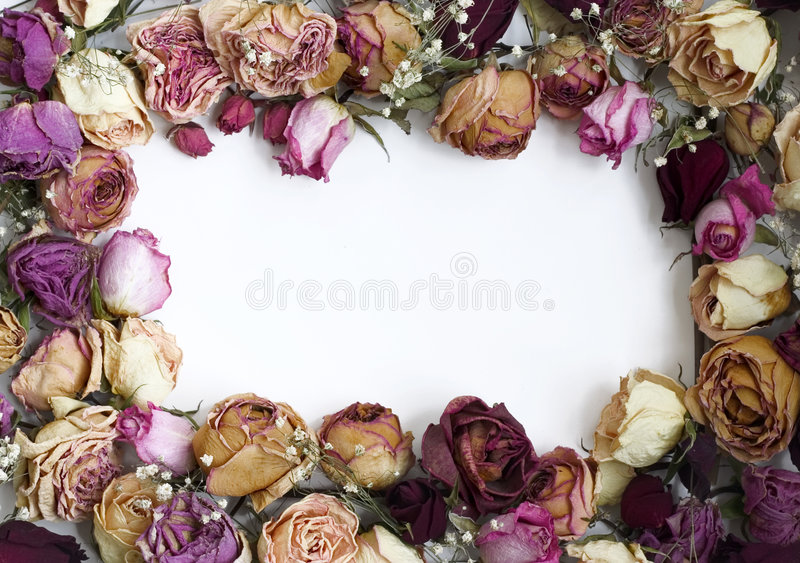 Trame de roses (2) images stock