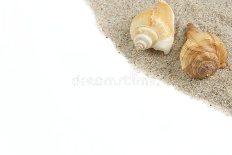 Trame de Seashell photos libres de droits
