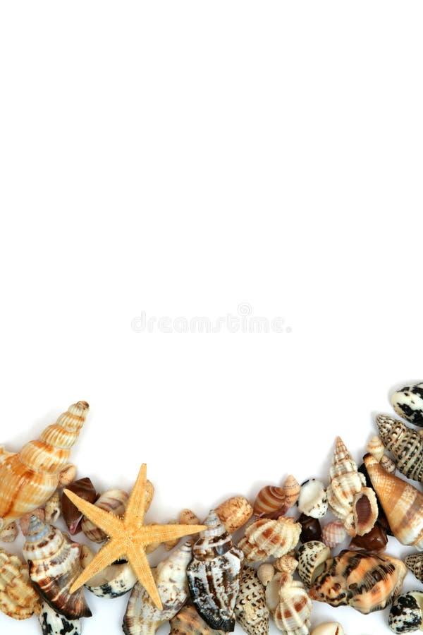 Trame de Seashells images libres de droits