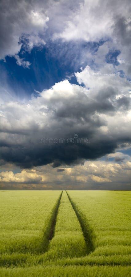 Tramlines im Getreide lizenzfreies stockfoto
