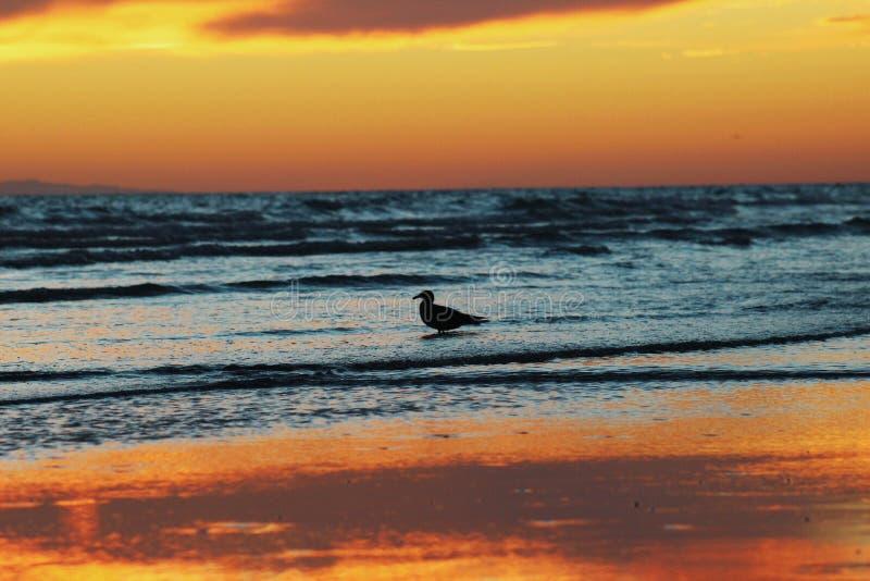 Tramonti della spiaggia immagini stock