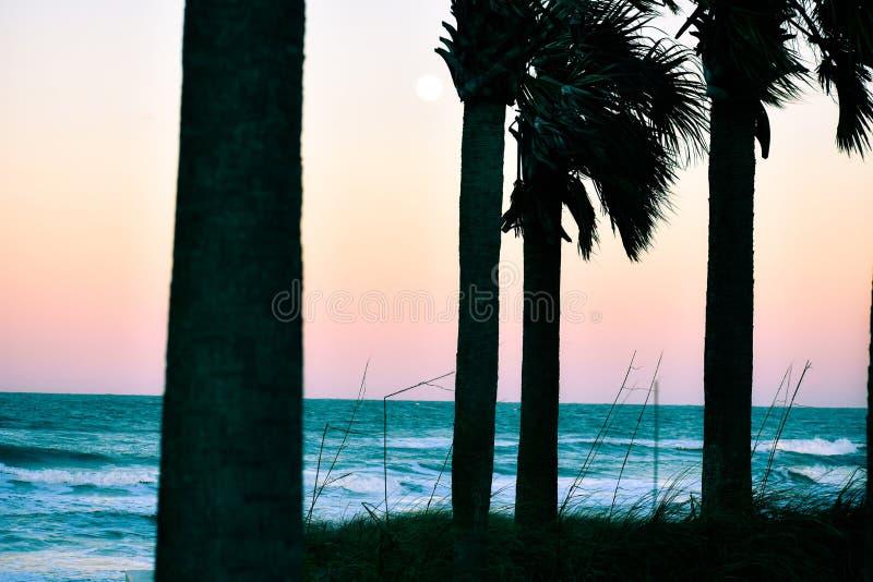 Tramonti e palme al crepuscolo lungo la costa delle spiagge di Florida in entrata di Ponce e spiaggia di Ormond, Florida immagini stock libere da diritti