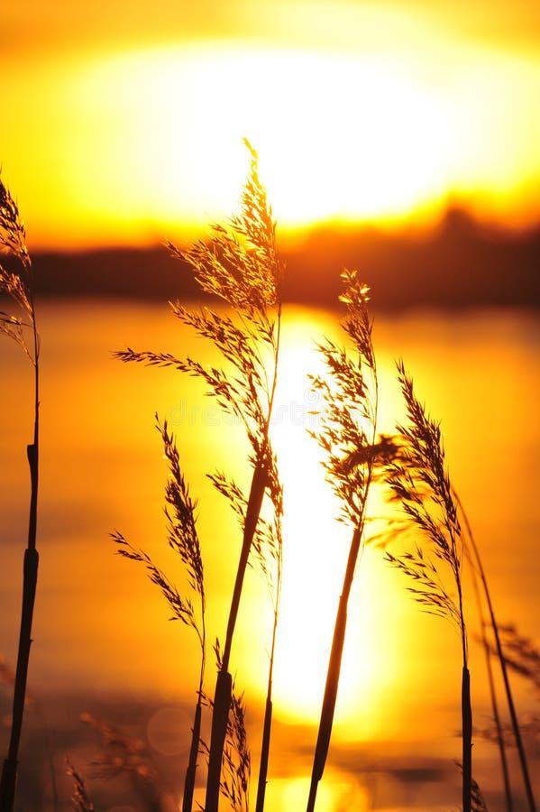 Download Tramonto fotografia stock. Immagine di alberta, dusk, nuvoloso - 7320708