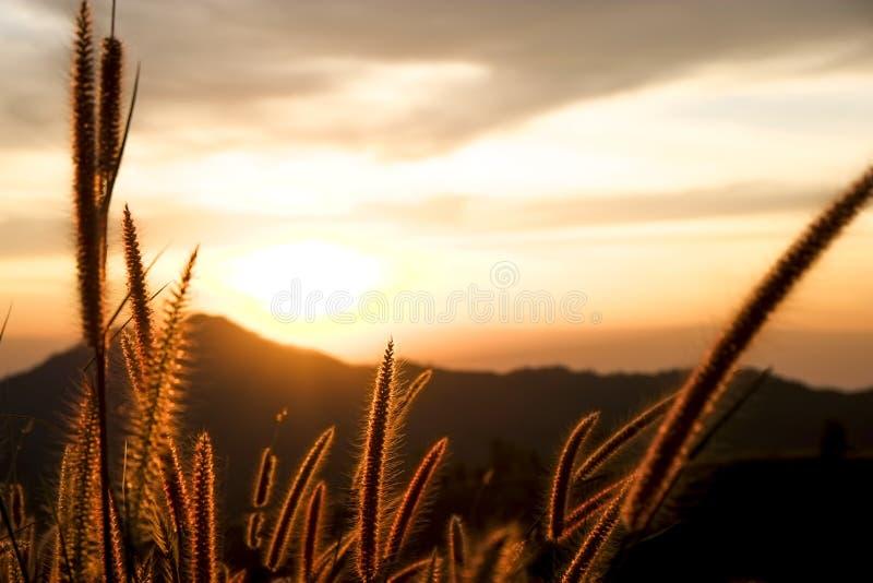 Tramonto, alba, cielo, verde, estate, fondo, sole, montagne, luce solare, bello, blu, natura, paesaggio, rosso, drammatico, campo immagini stock libere da diritti