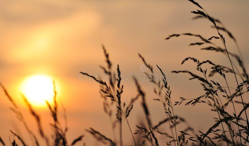 Tramonto/alba del frumento immagine stock libera da diritti