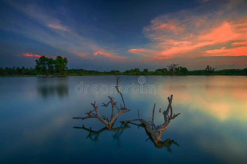 Tramonto, alba, Tanjung Burung, Tangerang, albero, paesaggio, natura immagini stock
