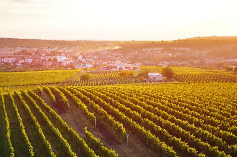 Tramonto arancio di stupore sopra il paesaggio della vigna in Moravia meridionale rurale, repubblica Ceca Il villaggio pittoresco fotografia stock
