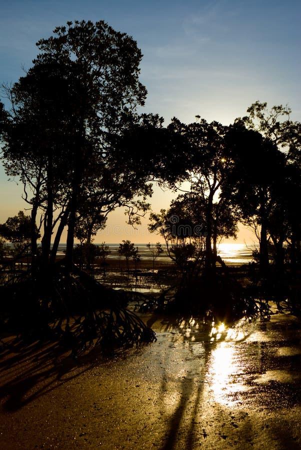 Tramonto attraverso le mangrovie fotografie stock libere da diritti