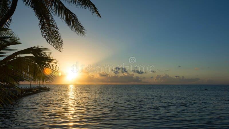 Tramonto caraibico incorniciato nella siluetta delle fronde della palma fotografia stock libera da diritti