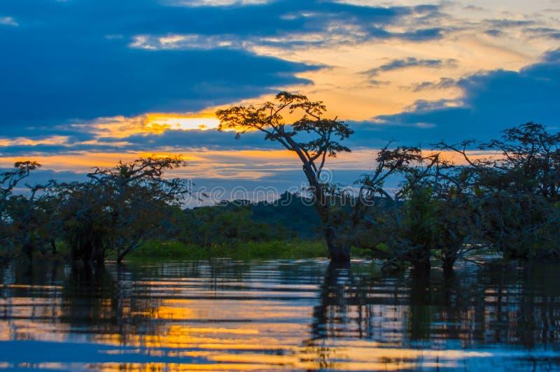 Tramonto che profila una giungla sommersa a Laguna grande, nella riserva faunistica di Cuyabeno, bacino di Amazon, Ecuador immagini stock libere da diritti