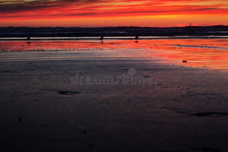 Tramonto Colourful sopra la spiaggia a Polzeath fotografia stock libera da diritti