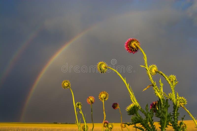 Tramonto con l'arcobaleno La Pampa fotografia stock