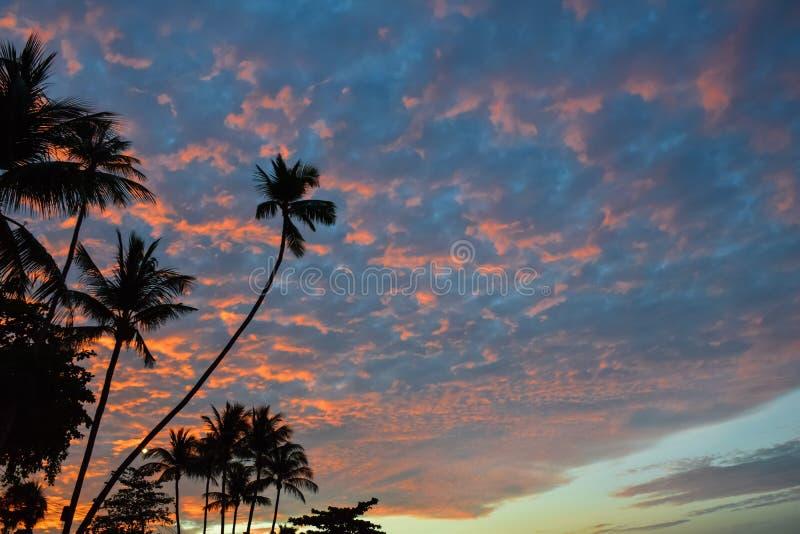 Tramonto con la siluetta dei cocchi alla spiaggia della Tailandia, isola di Samui fotografia stock