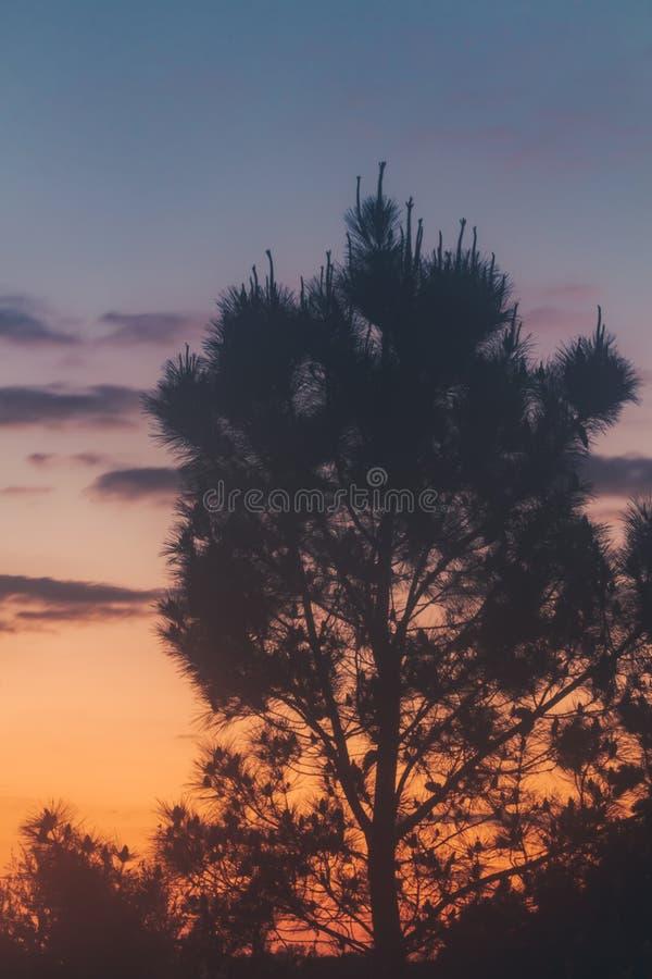 Tramonto con le nuvole e la corona del pino in siluetta fotografia stock