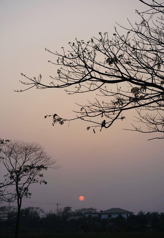 Tramonto con un albero e un uccello, Dacca immagine stock