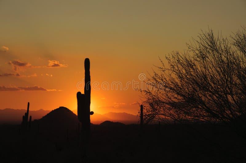 Tramonto del deserto dell'Arizona Senoran fotografie stock libere da diritti