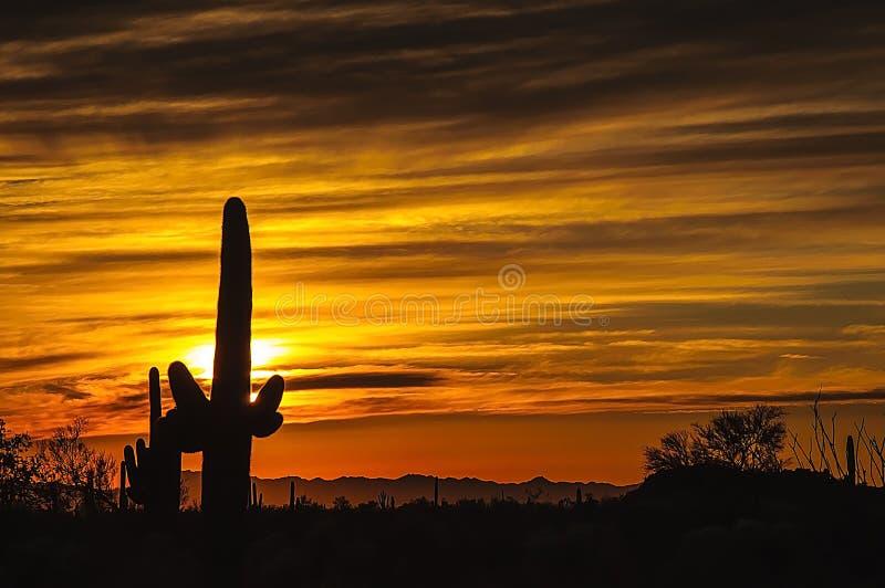 Tramonto del deserto dell'Arizona Senoran immagine stock libera da diritti