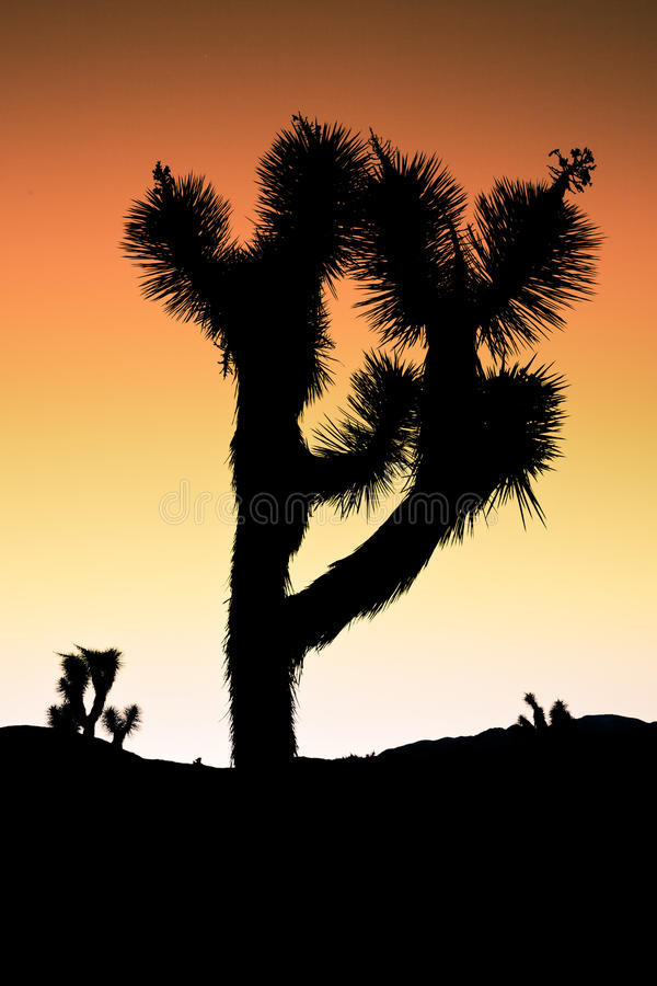 Tramonto dell'albero di Joshua fotografie stock libere da diritti