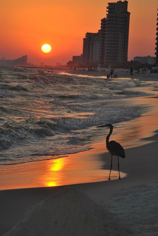 Tramonto della costa di golfo con l'airone fotografie stock libere da diritti