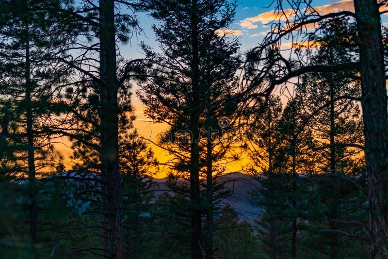 Tramonto della montagna di Colorado in abetaia immagine stock libera da diritti