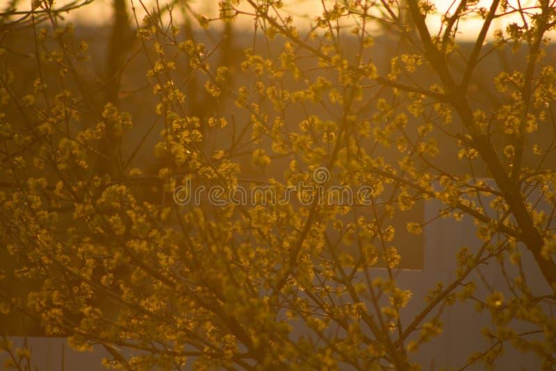 Tramonto della primavera nel campo fotografie stock