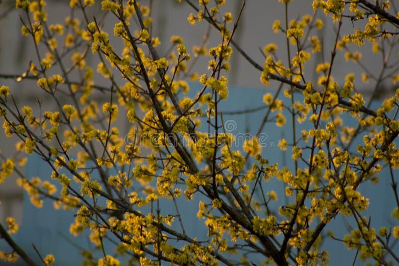 Tramonto della primavera nel campo immagine stock