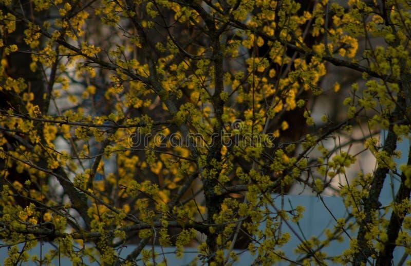 Tramonto della primavera nel campo fotografia stock libera da diritti