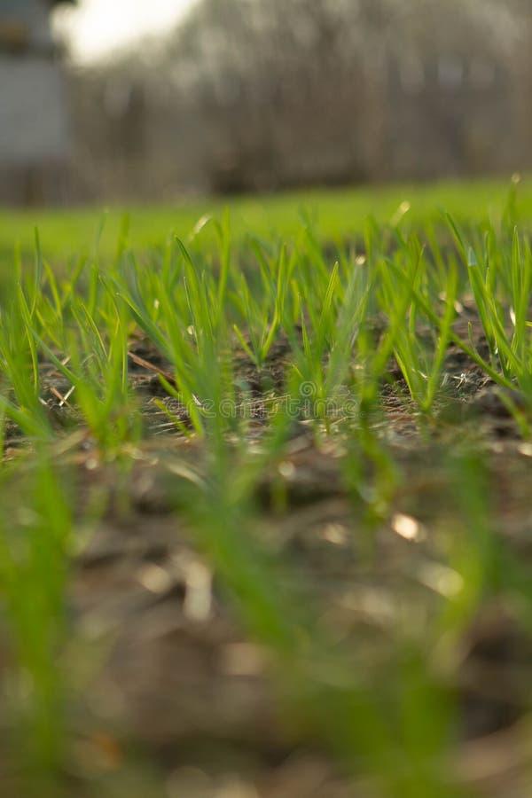 Tramonto della primavera nel campo fotografia stock
