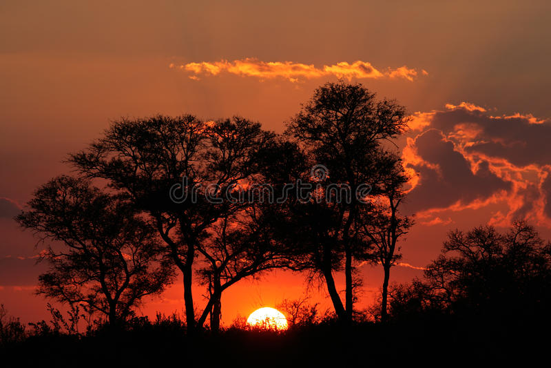 Tramonto della savanna, Sudafrica immagini stock libere da diritti