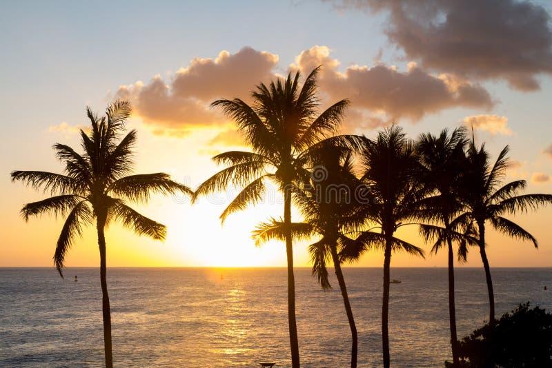 Tramonto delle Hawai con la siluetta della palma immagine stock