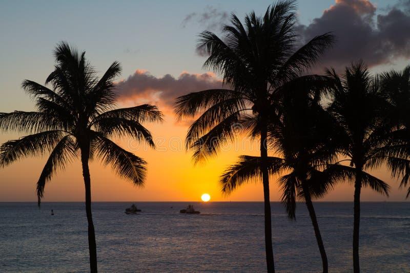 Tramonto delle Hawai con la siluetta della palma immagini stock