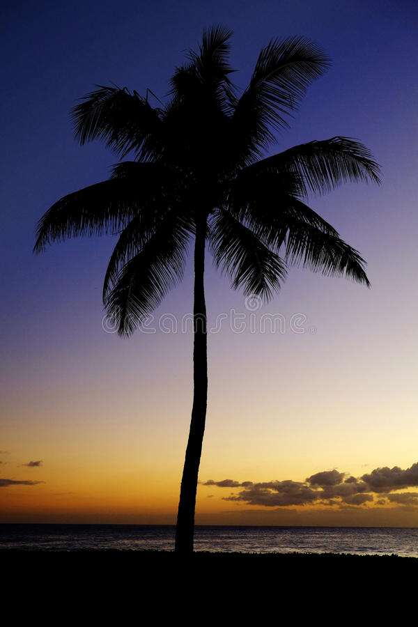 Tramonto delle palme vicino a posizione tropicale della spiaggia dell'oceano immagini stock