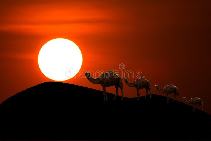 Tramonto in deserto con il caravan del cammello che passa attraverso le dune di sabbia immagini stock libere da diritti