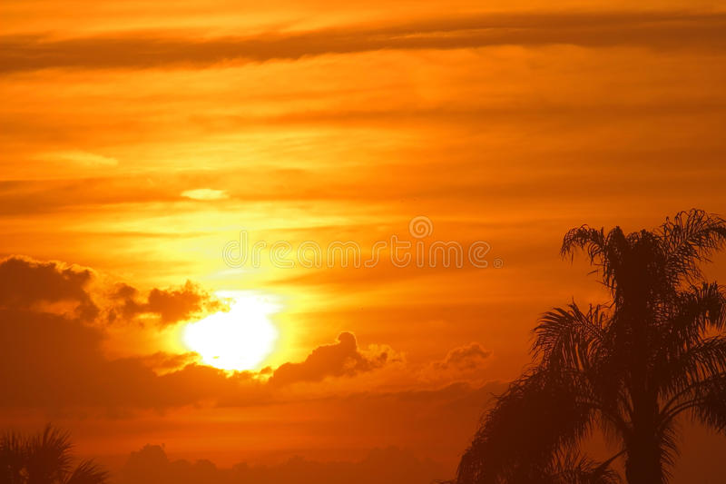 Tramonto di bello Maui dorato, Hawai con le palme immagine stock libera da diritti