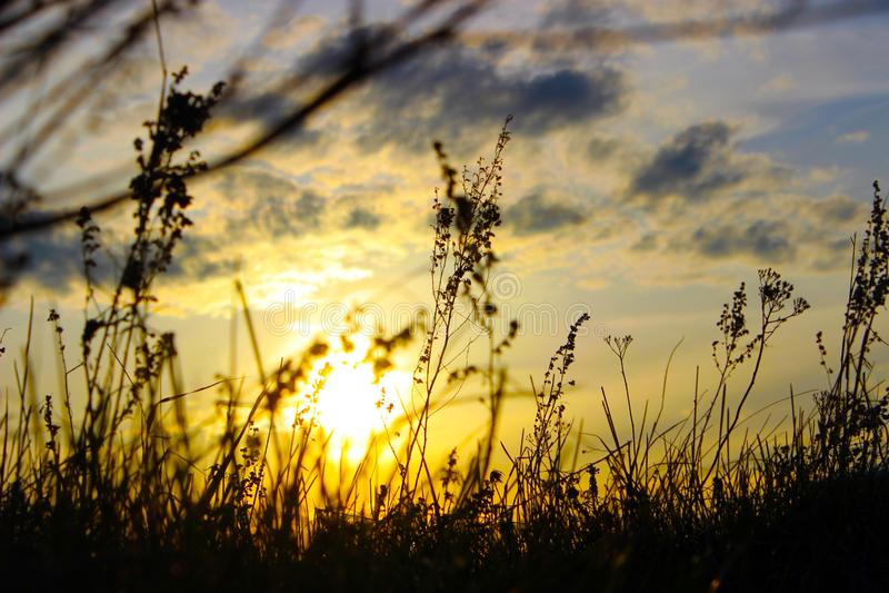 Tramonto di estate, tramonto di erbe, il cielo al tramonto fotografia stock libera da diritti