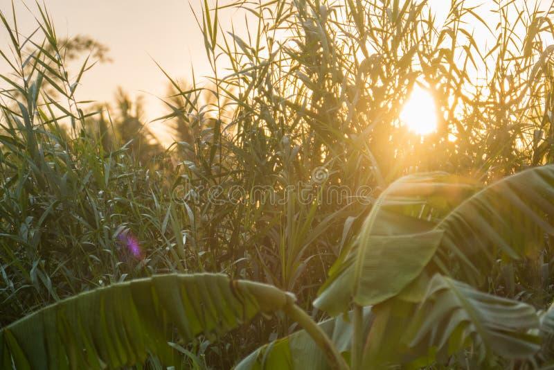 Tramonto di estate sopra erba verde immagine stock libera da diritti