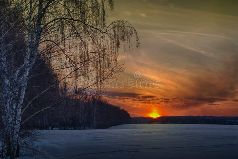 Tramonto di inverno betulla e campo fotografia stock libera da diritti
