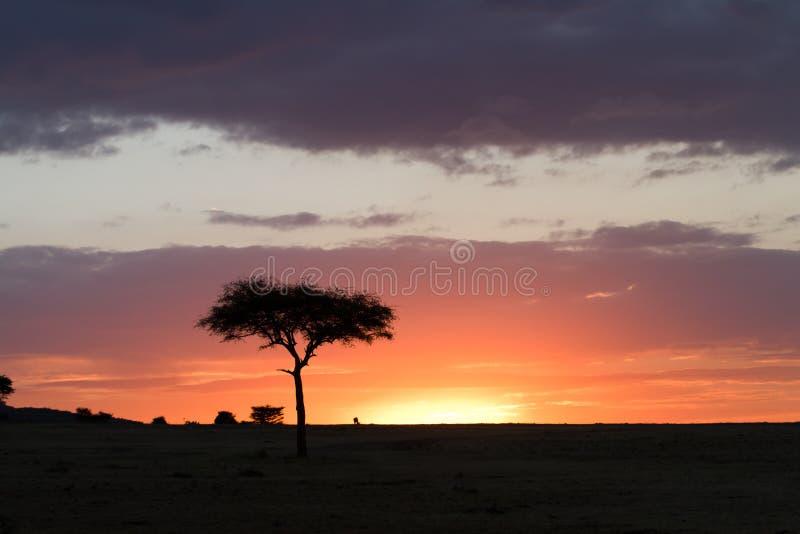 Tramonto di Mara dei masai fotografia stock