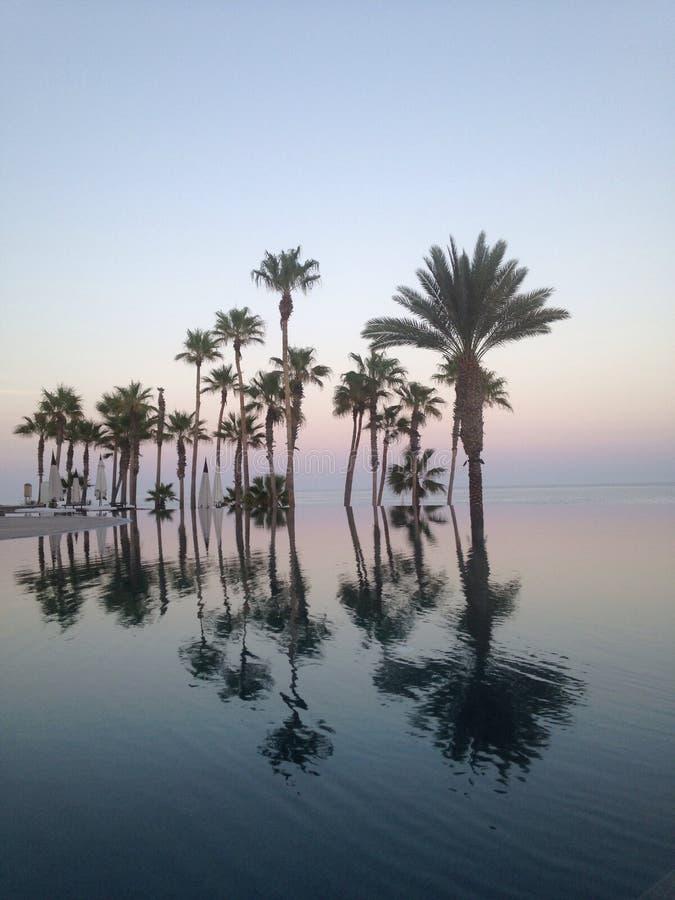 Tramonto di riflessione degli palma-alberi dello stagno di infinito immagini stock