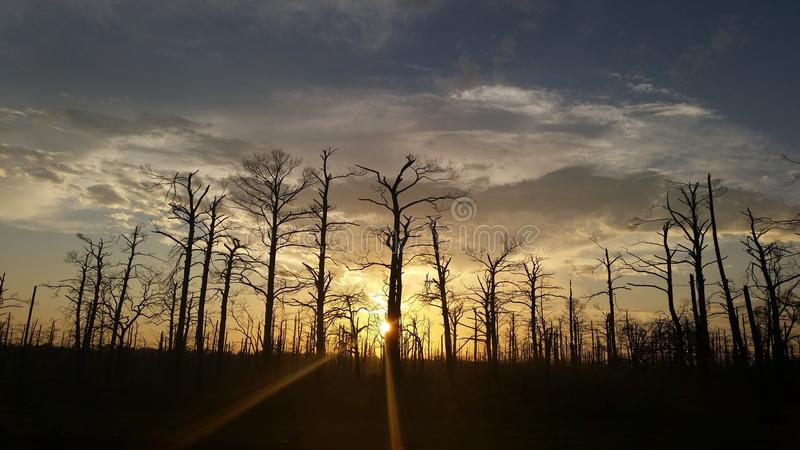 Tramonto dietro gli alberi fotografie stock