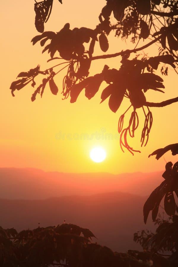 Tramonto dorato sopra catena montuosa e vegetazione tropicale fotografia stock libera da diritti