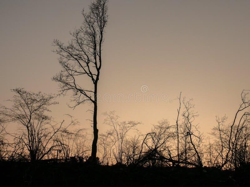 Tramonto drammatico stupefacente sopra paesaggio con la bella siluetta di giovani alberi fotografie stock libere da diritti